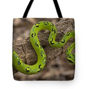 Yellow-blotched Palm Pitviper Tote Bag