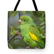 Yellow-chevroned Parakeet Brotogeris Tote Bag