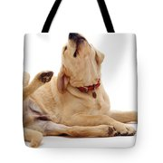 Yellow Labrador Scratching Tote Bag by Jane Burton