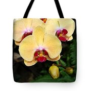 Yellow Moth Orchids Tote Bag
