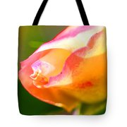 Yellow Rose Tipped In Pink Tote Bag