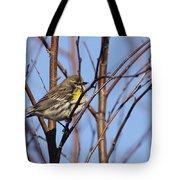 Yellow-rumped Warbler - Placid Tote Bag