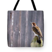 Yellow-shafted Flicker Posing Tote Bag