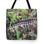 Yellow-spotted Millipede - Harpaphe Haydeniana Tote Bag
