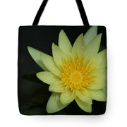 Yellow Waterlily - Nymphaea Mexicana - Hawaii Tote Bag