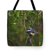 Yellowrumped Warbler Tote Bag