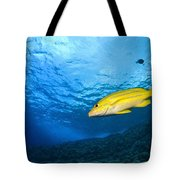 Yellowtail Snapper, Molokini Crater Tote Bag
