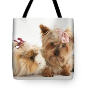Yorkshire Terrier And Guinea Pig Tote Bag