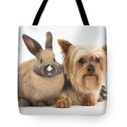 Yorkshire Terrier And Young Rabbit Tote Bag
