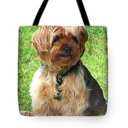 Yorkshire Terrier In Park Tote Bag