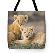 Young African Lion Cubs  Tote Bag
