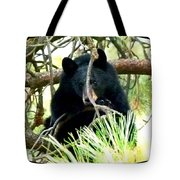 Young Black Bear Tote Bag