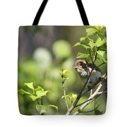 Young Blue Grosbeak Tote Bag