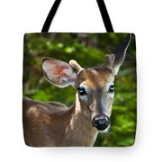Young Buck 2 Tote Bag