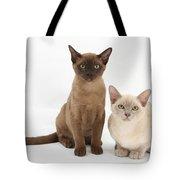Young Burmese Cats Tote Bag