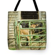 Young Calf In Fence Pen Near Barn Summer Maine Tote Bag