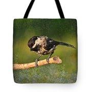 Young Chickadee Tote Bag