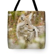 Young Coyote Canis Latrans In A Forest Tote Bag
