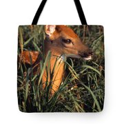 Young Deer Laying In Grass Tote Bag