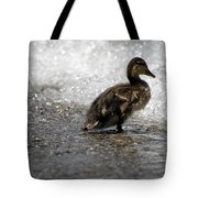 Young Duck On The Beach Tote Bag
