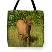 Young Elk Tote Bag