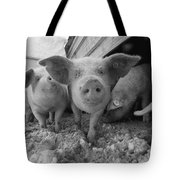 Young Pigs In A Snowy Pen. Property Tote Bag