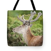 Young Red Deer Tote Bag