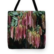 Young Red Leaves Lacking Chlorophyll Tote Bag