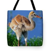 Young Sandhill Crane Tote Bag