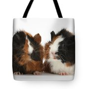 Young Tricolour Guinea Pigs Tote Bag
