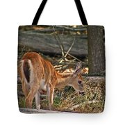 Young Whitetail Tote Bag