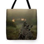 Zebra Equus Burchelli Tote Bag