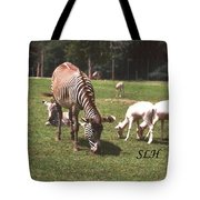 Zebra's Grazing Tote Bag