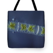 Zygnema Sp. Algae Lm Tote Bag