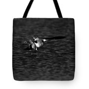 American Avocet Dance  Tote Bag