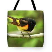 American Redstart Warbler Tote Bag