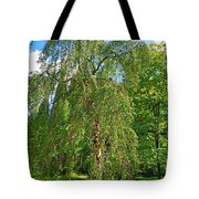 Birch Tree In Afternoon Tote Bag