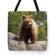 Brown Bear 4 Tote Bag