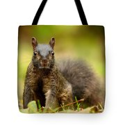 Curious Black Squirrel Tote Bag by Mircea Costina Photography