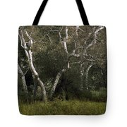 Dv Creek Trees Tote Bag