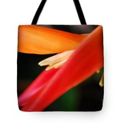 Fine Art - Bird Of Paradise Tote Bag
