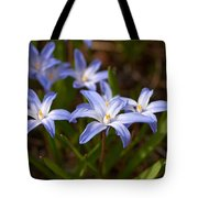 Glory Of The Snow 1 Tote Bag