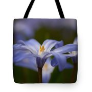 Glory Of The Snow 2 Tote Bag