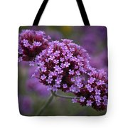 Purpletop Vervain Tote Bag