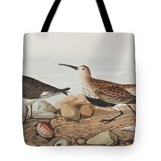 Red Backed Sandpiper Tote Bag