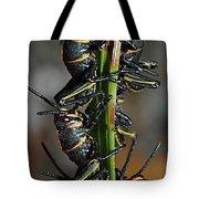 Romalea Microptera Hierarchy Tote Bag