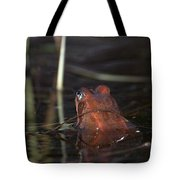 The Common Frog 2 Tote Bag