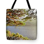 Warmth  Of The Pine Branch. Tote Bag