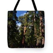 Yosemite Sequia Tote Bag by Atul Daimari