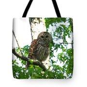 0298-001 - Barred Owl Tote Bag